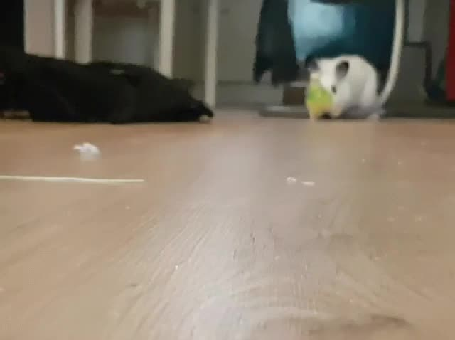 PeopleFuckingDying, budgies, Escaping some heavy assault GIFs