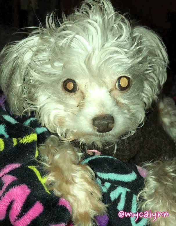 Watch Sleepy Dog GIF by Myca Lynn Beller (@mycalynn) on Gfycat. Discover more Sleepy Dog, bored dog, boring, cute, dog, puppy, sleepy, tired GIFs on Gfycat