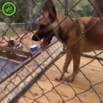 Watch this GIF on Gfycat. Discover more animalsbeingjerks GIFs on Gfycat