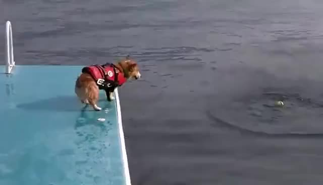 Watch and share Belly Flop GIFs and Animals GIFs on Gfycat