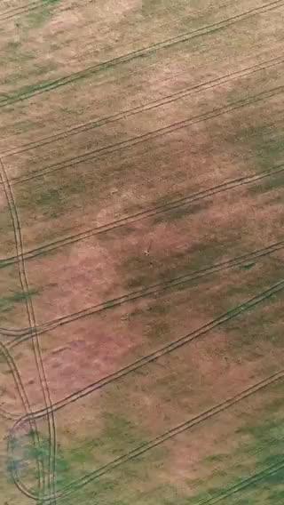 Helga in the fields