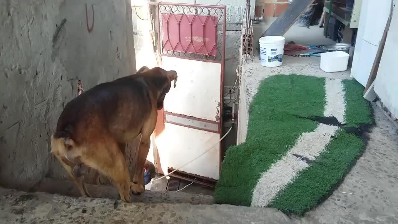 dog, dogs, hug, hugs, love, Benção GIFs