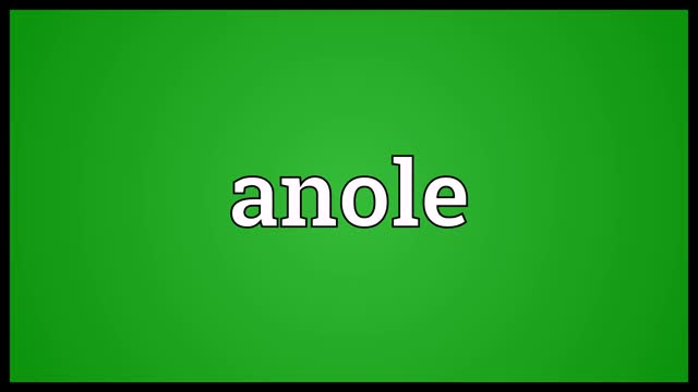 Watch and share Anole Pronunciation GIFs and Audio Dictionary GIFs on Gfycat
