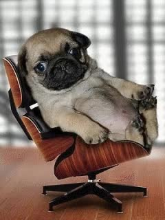 Watch and share Ugly Pug GIFs on Gfycat