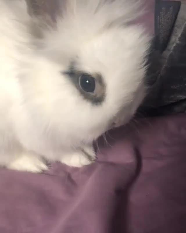 Watch Who else loves the little twitches before a bath? GIF on Gfycat. Discover more backtothefuture, bunbuns, bunnies, bunniesofinstagram, bunny, bunnylove, bunnymom, bunnynose, bunnysiblings, starwars GIFs on Gfycat