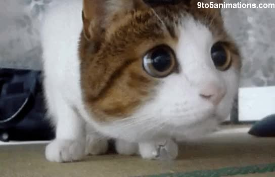 Watch and share Cat S GIFs on Gfycat