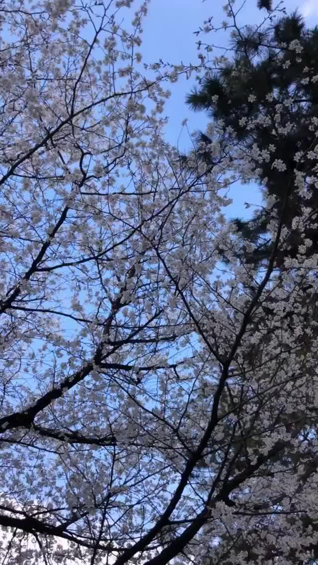 Watch and share Anacheri 2019-03-31 15:22:50.464 GIFs by Pams Fruit Jam on Gfycat