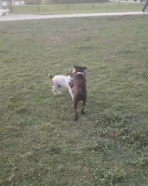 Watch and share /r/dogberg - From _spikethepup GIFs by cakejerry on Gfycat