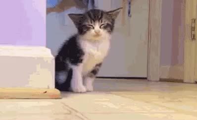 cat, cute, kitten, kitty, monday, overslept, pet, sleep, sweet, tired, wake up, zzz, Sleepy cat GIFs