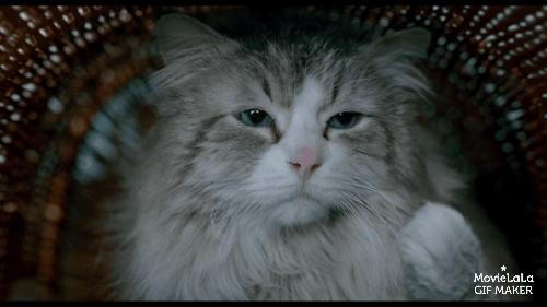 aww_gifs, catreactiongifs, ninelivesmovie, Nine Lives Trailer GIFs