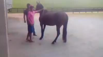 cavalo GIFs
