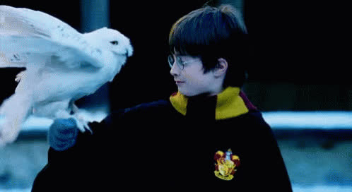 Hedwig Harrypotter GIFs