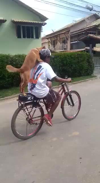 Watch and share Cachorro GIFs by Ah Negão on Gfycat